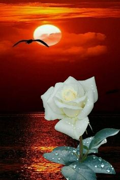 Healthy people 2020 goals and objectives kidney problems pdf 2016 Rose Images, Flower Images, Flower Art, Beautiful Rose Flowers, Beautiful Sunset, Art Floral, Hibiscus, Virtual Flowers, Lavender Roses