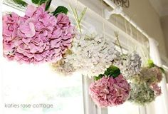 martha vineyard cottage hydrangea rose - Yahoo Image Search Results