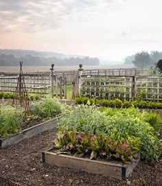 This Ohio kitchen garden is planted with lettuces, basil, chard, and dandelion greens. #gardens