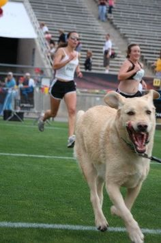 Run, don't walk, to these pawesome dog-friendly 5K events in June.