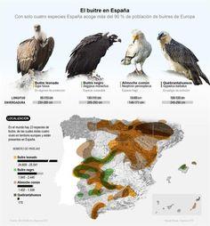 El buitre en España Geometry Problems, Especie Animal, Migratory Birds, Animal Posters, Nature Study, Birds Of Prey, Cartography, Prehistoric, Animals And Pets