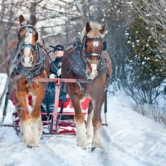 Wouldn't it be wonderful to ride this sleigh?