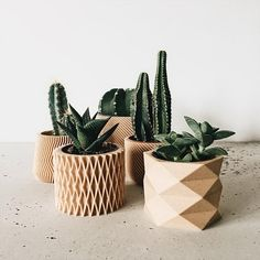of 4 small indoor planters - Original planter gift ! : We bet you have the perfect place for these printed plantersSet of 4 small indoor planters - Original planter gift ! : We bet you have the perfect place for these printed planters Succulent Gifts, Succulent Terrarium, Cacti And Succulents, Potted Plants, Cactus Plants, Cactus Art, Foliage Plants, Plant Pots, Terrariums