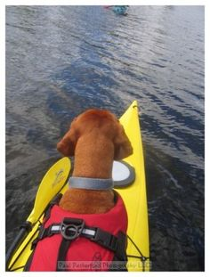 Vizsla on bow of Kayak in Lake Superior by http://www.PaulRetherford.com
