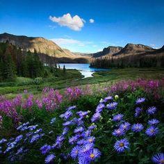 """frases,mensagens e poesias: Frase do dia-  """"A beleza agrada aos olhos, mas é a doçura das ações que encanta a alma."""" Voltaire"""