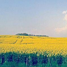 Canola Fields in Haute Saone / France by Stopover