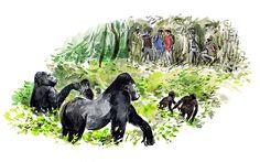 #DanWilliams #gorilla #safari #jungle #illustration #lindgrensmith