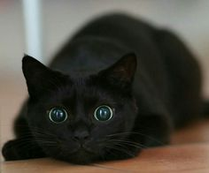 Crazy cat eyes is gonna pounce...