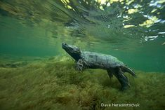Rivers and Streams Animals | Appalachian Rivers: Streaming with Life - National Wildlife Federation