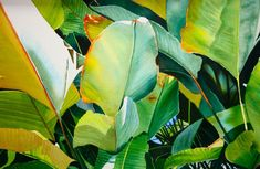 Tropical Leaves | Artists for Conservation