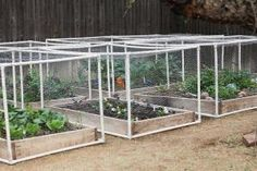 pvc pipe + hardware cloth to make raised garden beds cat/bird proof - also good design for rabbit tractor by proteamundi
