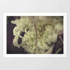 Romantic Chrysanthemum  Art Print by satyalila - $17.68