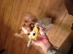 Loves his ducky