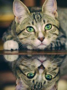 Ojitos verdes ... y su reflejo ...