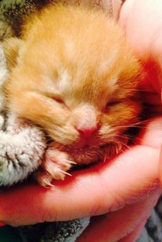 Tiny Kitten Found Covered In Soot After Massive Fire Is A True Survivor