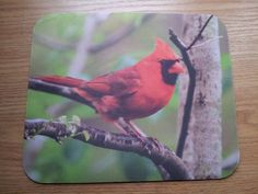 Cardinal Mouse Pad - Cardinal on a Branch.  Dozens of designs to choose from!  Always FREE shipping!  $10