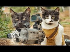 Cats vs. Zombies [Video] - Geeks are Sexy Technology NewsGeeks are Sexy Technology News