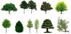 Site offers dozens of vegetation images to insert into Renders Landscape Architecture, Landscape Design, Parque Linear, Revit, Photorealistic Rendering, Project Presentation, Modelos 3d, Scene Creator, Photoshop Design