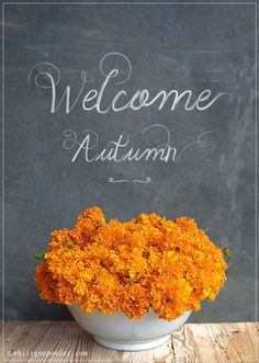 Autumn ~ marigold @Emelia Benoit-Lavelle we planted these! mine started to grow!
