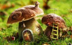 Mushroom fairy houses