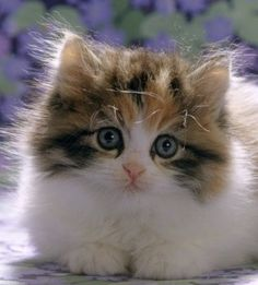 I think this must be the cutest kitten I've seen in a long time….