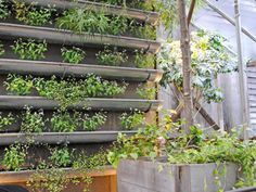 Salvaged Gutters - Vertical Garden