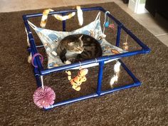 DIY Pinspiration: No instructions but this looks like so much FUN! Someone made a cat hammock/play center with PVC and a little fabric! Could start with these instructions & modify: www. Diy Cat Hammock, Diy Cat Toys, Cat Room, Cat Condo, Cat Accessories, Animal Projects, Cat Crafts, Cat Furniture, Pet Beds