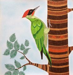 From The Colouring Book Animal Kingdom See More Green Woodpecker Millie Marottas Coloured By Laura