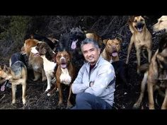 A Healthy Reminder; The Cesar Millan Divorce Case - YouTube
