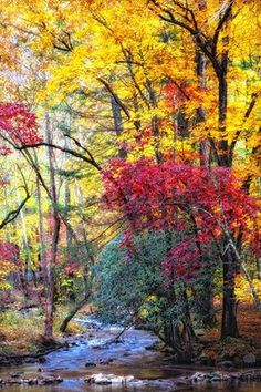 Golden and red fall leaves in the Great Smoky Mountains! - Science and Nature Gatlinburg Cabin Rentals, Smoky Mountains Tennessee, Great Smoky Mountains, East Tennessee, Smoky Mountain National Park, Smokey Mountain, Autumn Scenes, Mountain Vacations, Paisajes