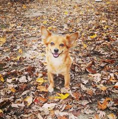 10 Products That Will Make Your Dog Fall for Fall – AngusPost