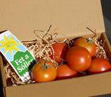Frische mallorquinische Tomaten