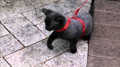 Bruce the cat - YouTube #kitten #Brucethecat brucethecat.co.nz