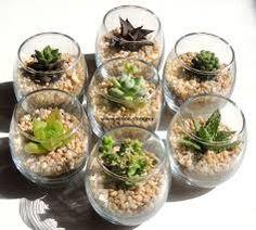 Kristall Mini Terrarien Mini Kakteen Plant Suculentas von VindeMX en Et C Plantes grasses