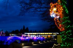 Top 10 Reasons to Visit WildLights - Woodland Park Zoo Seattle WA Holidays With Kids, Holidays And Events, Zoo Lights, Woodland Park Zoo, Christmas Vacation, Wedding Vendors, Light Up, Lanterns