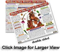 Herbal medicine and home treatments for horses