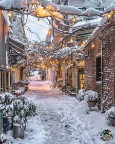 ideas for nature winter wonderland snow scenes Winter Szenen, Winter Magic, Winter Time, Winter Season, Winter Walk, Winter Months, Christmas Scenes, Quebec City Christmas, Christmas Lights