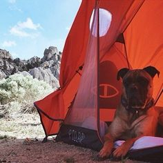 A Poler tent interacting with some wildlife.   #poler #polerstuff #campvibes