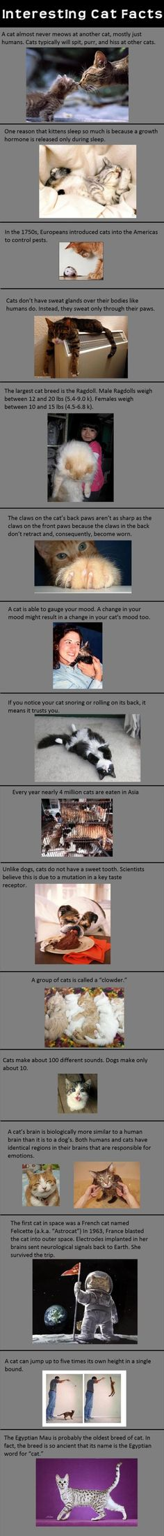 Interesting Cat Facts cute animals cat cats adorable animal kittens kitten facts