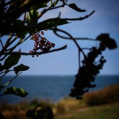 Smukke Vestfyn #visitfyn #fyn #visitdenmark #naturelovers #nofilter #natur #denmark #danmark #dänemark #landscape #nofilter #sky #assens #mitassens #vildmedfyn #fynerfin #vielskernaturen #sea #visitassens #instapic #picoftheday #sommer #september #beautiful #sea #ocean