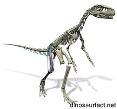 The #Staurikosaurus was one of the earliest #dinosaurs to walk the earth, which was discovered in modern times. It was a tiny theropod that was in existence in the middle Triassic period of the Mesozoic era. The timeline of its existence is judged at about 230 to 220 million years ago.