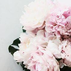 blush blooms