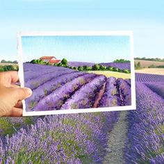 And here are France's famous lavender fields. | Community Post: This Artist Re-Creates Stunning Landscapes By Blending Real Life And...
