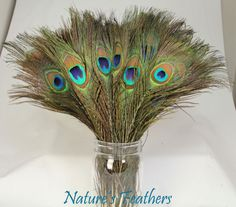 50pcs Real Natural Peacock Feathers about 1012 by naturesfeathers, $22.99