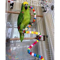 Balançoire Suspendue Cage Bois Perles Jouet Chaîne Pr Oiseau Perroquet Calopsitt