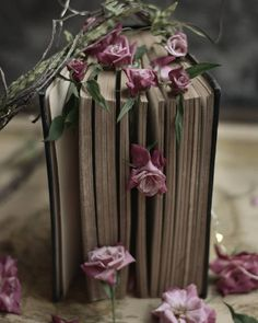 Book Aesthetic, Purple Aesthetic, Raindrops And Roses, Book Letters, Black Butler Anime, Beautiful Rose Flowers, Cute Profile Pictures, Hanging Flowers, Rose Cottage