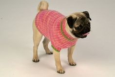 Ravelry: Lemon Sweater pattern by Corinne Niessner Knit Dog Sweater, Cat Sweaters, Dog Coats, Knitting Designs, Cat Toys, Fur Babies, Your Pet, Puppies, Sewing Projects