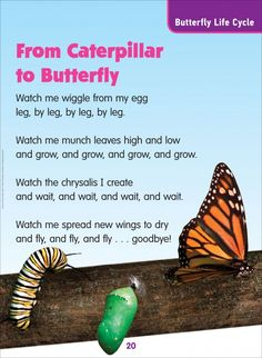 From Caterpillar to Butterfly (Butterfly Life Cycle): Science Poem