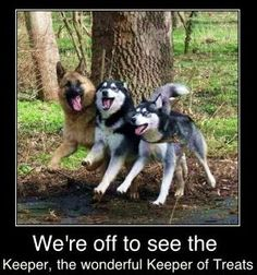 German Shepard, Alaskan Malamute, and Siberian Husky. My future dogs! Funny Animals With Captions, Funny Animal Memes, Animal Quotes, Cute Funny Animals, Funny Animal Pictures, Funny Cute, Funny Memes, Animal Captions, Funny Pictures With Captions