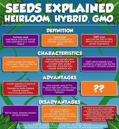 Seeds Explained: Heirloom, Hybrid, GMO » The Homestead Survival